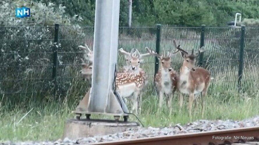 'Hertenfluisteraar' Zandvoort waarschuwt NS voor herten op het spoor