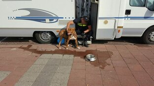 Politie bevrijdt hond uit camper op Zandvoortse boulevard