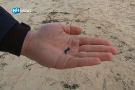 Zwarte korrels op strand Zandvoort komen van overboord geslagen containers