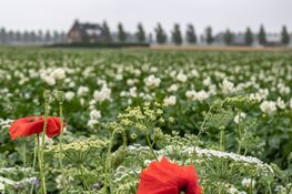 Coalitie Noord-Holland ''Duurzaam doorpakken!'