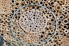 Scholieren onderzoeken ingezaaide akkers op aanwezigheid insecten