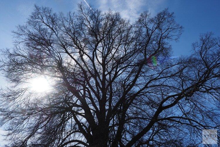 Veel bomen in Zandvoort aangetast door iepziekte